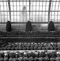 Conservatory in winter, St. Paul. Dec 1976